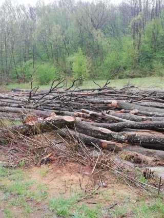FURTUL de LEMNE continuă - Transporturile ilegale de lemne s-au dublat față de anul trecut