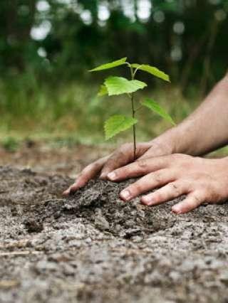 """Peste 500.000 de puieţi plantaţi în acest an prin campania naţională de voluntariat """"Plantăm fapte bune în România"""""""