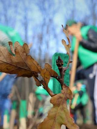 Romsilva va planta circa 20 milioane de puieți forestieri în campania de împăduriri de primăvară